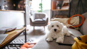 animais em apartamento